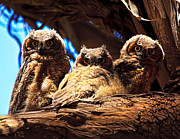 Owlet Photos - Hoo Are You by Beth Sargent