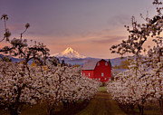 Mount Hood Oregon Prints - Hood River Sunrise Print by Darren  White