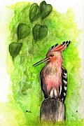 Bird Art Drawings Prints - Hoopoe Print by Angel  Tarantella