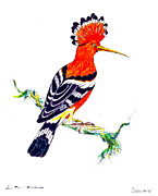 Chalk Drawing Metal Prints - Hoopoe - Upupa epops Metal Print by Kurt Tessmann