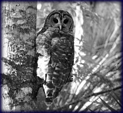 Owl Greeting Card Prints - Hoot Owl I Print by Sheri McLeroy