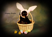 Dachshund Puppy Digital Art Posters - Hoppy Easter Poster by Denise Oldridge