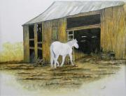 Shed Drawings Framed Prints - Horse and Barn Framed Print by Bertie Edwards