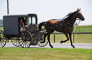 Horse And Buggy Posters - Horse and Buggy Poster by Sharon Sefton