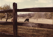 Split Rail Fence Framed Prints - Horse and Split Rail Fence Framed Print by Robert Estes
