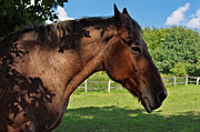 Angela Doelling AD DESIGN Photo and PhotoArt - Horse