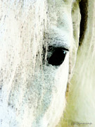 Wall Art Prints Digital Art - Horse Art - Forever Home by Sharon Cummings