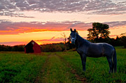 Randall Branham - Horse at Sundown
