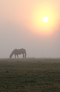 Horse Stable Digital Art Posters - Horse at Sunrise Poster by Bill Cannon