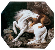 Stubbs Framed Prints - Horse Attacked by a Lion Framed Print by George Stubbs