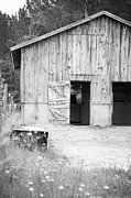 Tim Braunlin - Horse Barn Old Rustic...