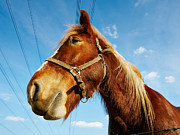 Nick  Biemans - Horse behind a barbed wire