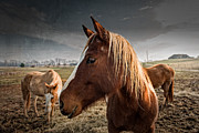 Tennessee Farm Digital Art Prints - Horse Composition Print by Brett Engle