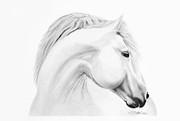 Horse Print by Don Medina