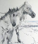 Wild Horse Drawings - Horse Drawing by Mike Jory