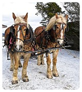 Snow Horses Framed Prints - Horse Drawn Sleigh Framed Print by Edward Fielding