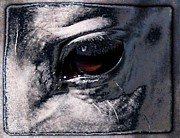 Animals Digital Art - Horse eye by Gun Legler