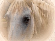 Horse Images Digital Art Prints - Horse Eye Print by John Vito Figorito