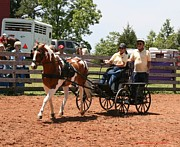 Ga Photos - Horse Fair by Sherrie Winstead