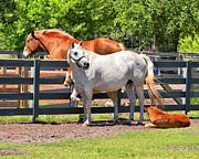 Mary Almond - Horse Family