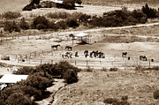 Brown Toned Art Metal Prints - Horse Farm at Kourion Metal Print by John Rizzuto