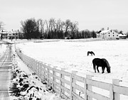 Pasture With Snow Prints - Horse Farm in Winter Print by Jim Culler