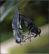 Gray Horse Photos - Horse Fly by DigiArt Diaries by Vicky Browning
