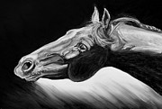 Nature Study Painting Metal Prints - Horse Head Black and White Study Metal Print by Renee Forth Fukumoto