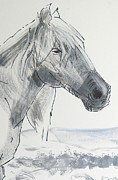 Mike Jory - Horse Head Drawing