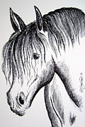 Wild Horse Drawings - Horse head by Roberto Gagliardi