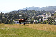 Phillies Photo Prints - Horse Hill Mill Valley California 5D22662 Print by Wingsdomain Art and Photography