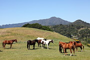 Horse Hill Mill Valley California 5d22672 Print by Wingsdomain Art and Photography