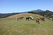 Marin Photos - Horse Hill Mill Valley California 5D22673 by Wingsdomain Art and Photography