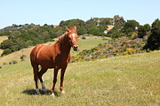 Horse Hill Mill Valley California 5d22679 Print by Wingsdomain Art and Photography