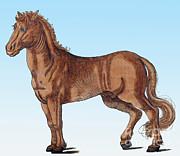 Science Source - Horse Historiae Animalium
