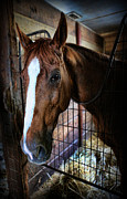 Horse Stable Posters - Horse in a Box Stall - Horse Stable Poster by Lee Dos Santos