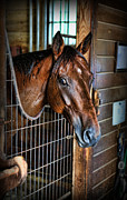 Horse Stable Posters - Horse in a Box Stall II - Horse Stable Poster by Lee Dos Santos