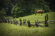 Split Rail Fence Framed Prints - Horse in a Pasture along the Blue Ridge Parkway Framed Print by Randall Nyhof