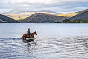 Bel Menpes - Horse in Airds Bay Loch...