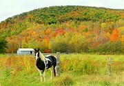 Elaine Franklin - Horse in Autumn Field