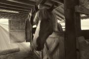 Dan Friend - Horse in barn stall