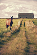 Moorland Posters - Horse In Field Poster by Christopher and Amanda Elwell