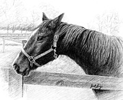 Drawing Of Franklin Tennessee Drawings Posters - Horse in Franklin TN Poster by Janet King