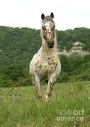 M Watson - Horse In Meadow