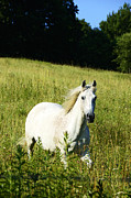 West Photos - Horse in Pasture by Thomas R Fletcher