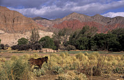 Argentina - Horse in Quebrada de Humahuaca by James Brunker