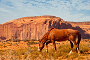 Grazing Horse Posters - Horse in the Desert Poster by Susan  Schmitz