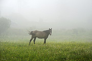 The Horse Digital Art Metal Prints - Horse In The Fog Landscape Metal Print by Christina Rollo