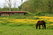 Rural School Bus Posters - Horse in the Meadow near Weetamoo Poster by Andrew Pacheco