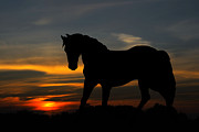 Sundown Posters - Horse in the sundown Poster by Kristin Kreet